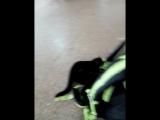 Страшный зверь терзает мой рюкзак))