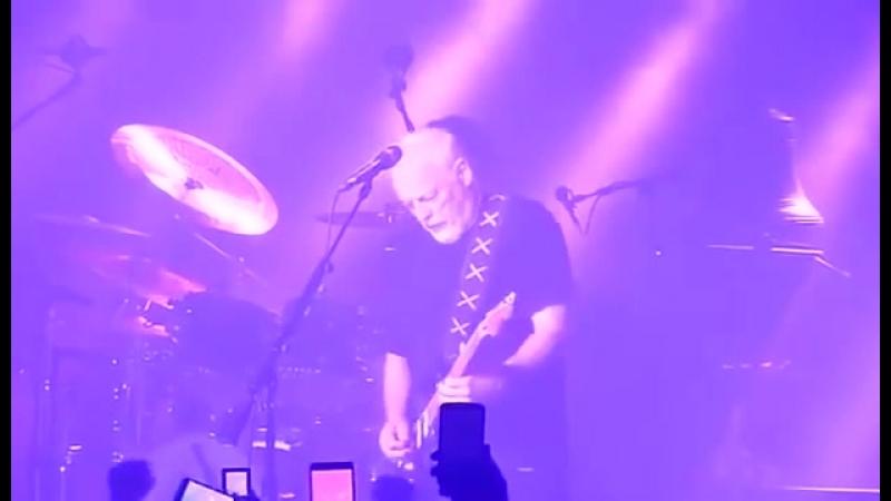 David Gilmour - Comfortably Numb (featuring Purple Rain)