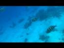Подводный мир🐠 Красное море🌊 Отпуск