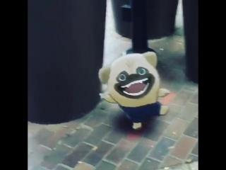 Dancing pug in Tokyo