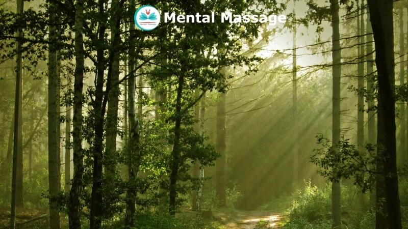 Умиротворяющие звуки природы. Живой лес, пение птиц, шелест деревьев. The soothing sounds of nature