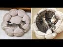 PRIMA E DOPO Gatti fotografati prima e dopo essere cresciuti