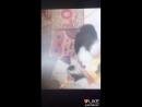 Котики единароги