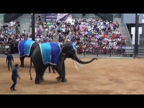 Лучшее в Тайланде Шоу слонов.Тропический сад Нонг Гнуч. Паттайя (12.07.2018)