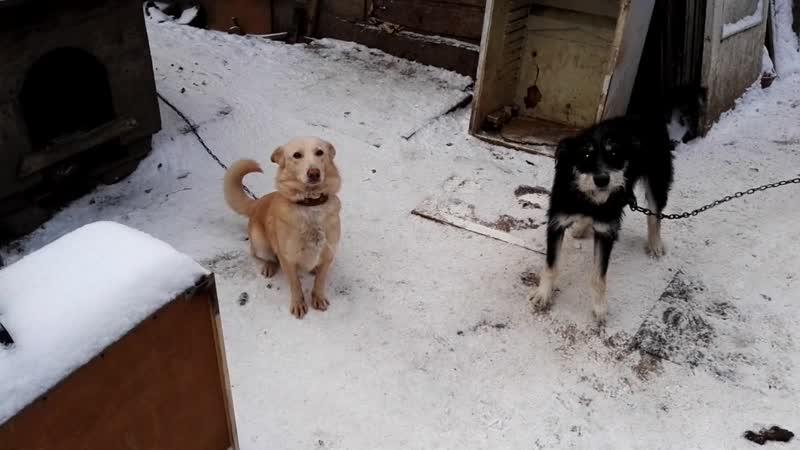 Щенки и собаки ищут дом.mp4