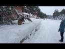"""Команда """"Барьер"""" или игра с собакой в снежки..."""