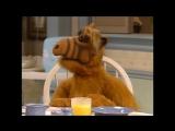 Alf Quote Season 4 Episode 4_Удача