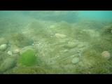 Гурзуфское море после двух дней дождей 15.07.18