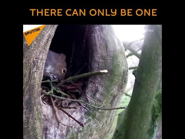 Дерзкая белка совершила рейдерский захват гнезда совы
