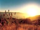 В Край Родной Пустыней греховной земной