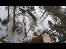 Валка Частями и Спил деревьев в Детском саду .