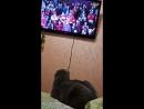 Даже наш кот Макс болеет за Спартак!!!