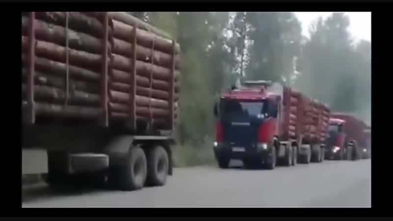 Началось Мужики Перекрыли Дорогу Лесовозам Вывозящим Кругляк в Китай