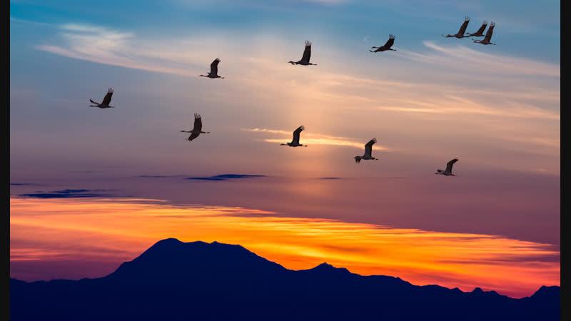 Vince Forwards - Birds Of Passage