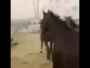 Крупный пожар на конюшне в Калифорнии