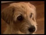Х/Ф Ленни - чудо собака! (2004г)