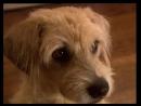 "ХФ ""Ленни - чудо собака!"" (2004г)"