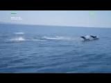 Дельфины посоревновались с моторной лодкой