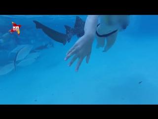 Акула напала на девушку во время свадебного путешествия