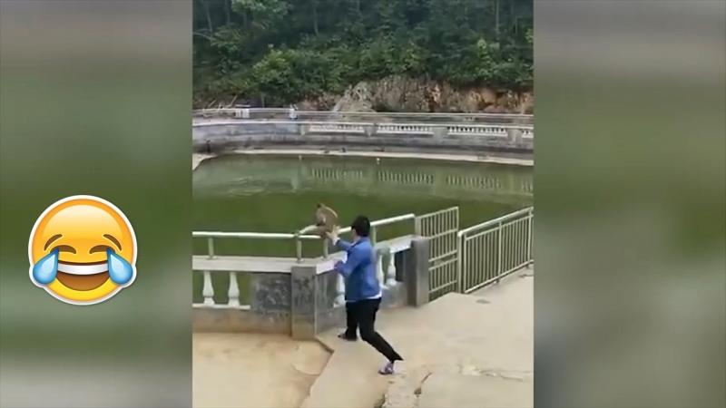Мгновенная карма. Турист толкнул макаку в воду