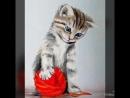 Подборка милых котиков.