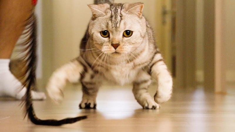 고양이와 액션영화처럼 슈퍼슬로우모션으로 찍어보았다