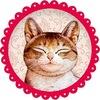Гостиница для кошек Екатеринбург ЗаМУРчательные