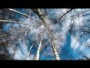 Hexenblätter - 1/4. Mond - Birke - der Anfang