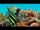 Коралловый риф - 432 Гц ...
