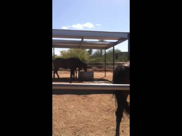 Tierra Madre Horse Sanctuary's Suze, Doing Her Elephant Impersonation