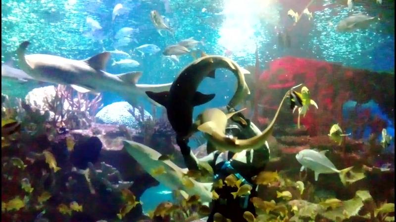 Шоу с акулами в питерском океанариуме!