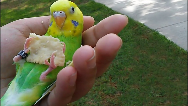 Cracker Birb