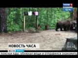 Медведь забрёл в лагерь экспедиции во Фролихинском заказнике на северо-востоке Байкала