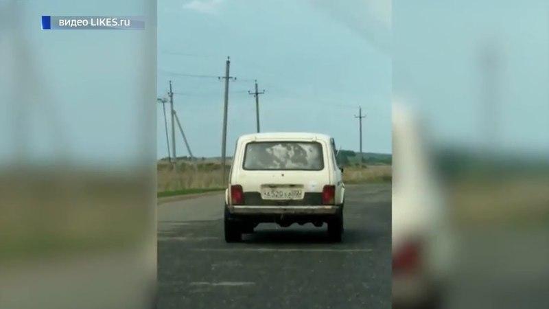 Необычного пассажира в машине сняли очевидцы на дорогах Башкирии