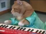 laibach cat #coub, #коуб