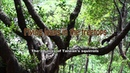 Flying Leaps in the Treetops - The 3D Lives of Taiwan's Squirrels (Short Version)