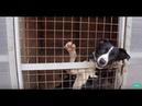 Хочу домой Бездомные животные ищут хозяина История собаки Тины