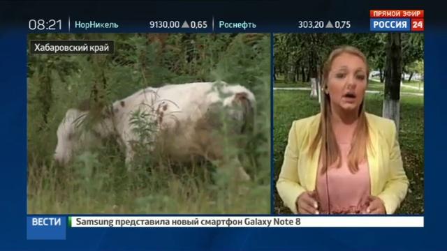 Новости на Россия 24 • Дальневосточный гектар пожелали получить уже 100 тысяч россиян