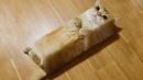 КОТЫ 💎 Смешные коты Русские приколы с котами до слез под музыку – Смешные кошки МатроскинТВ