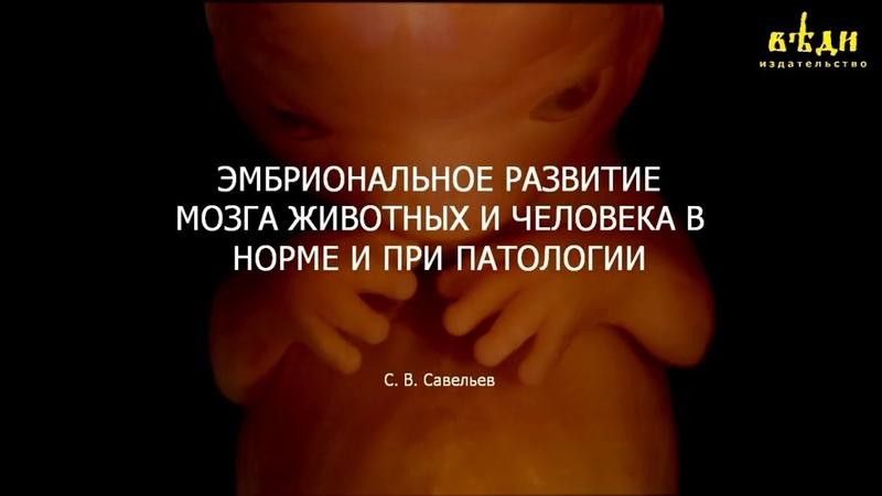 Эмбриональное развитие мозга в норме и при патологии. С.В. Савельев. МГУ