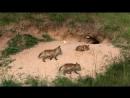 Дикая природа Германии 09 Уккермарк Познавательный животные 2012