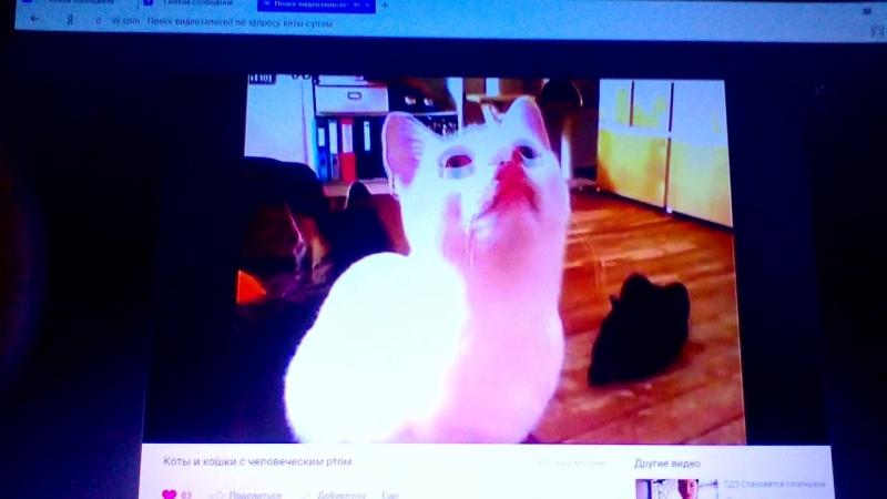 коты с ртом
