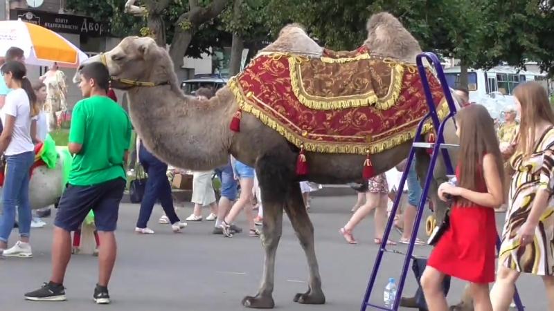 Верблюд в городе, город Орёл, день города Орла, 5 августа 2018 год. 05.08.2018 Орел