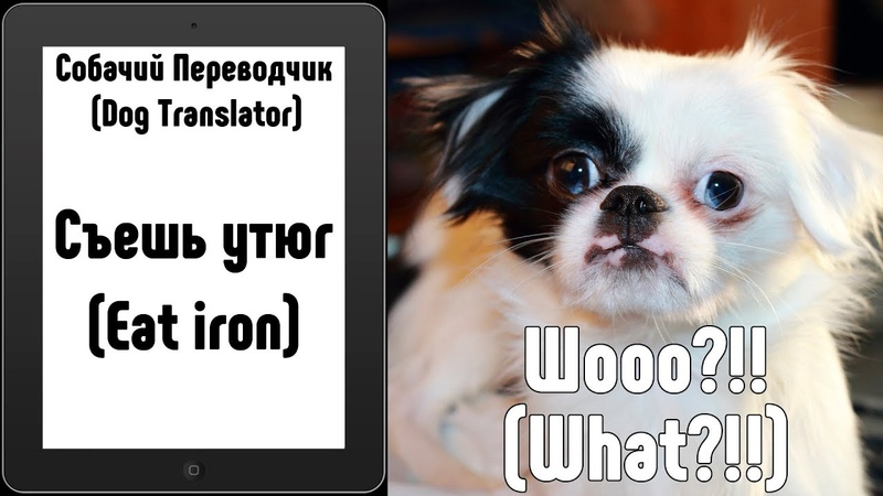 Собачий Переводчик (Dog Translator) - проверяем на собакевиче