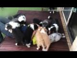 Атака щенками