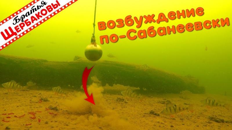 ЗИМНИЕ ОКУНИ и ВОЗБУЖДЕНИЕ ПО-САБАНЕЕВСКИ. Подводные съемки. Зимняя рыбалка (Братья Щербаковы)