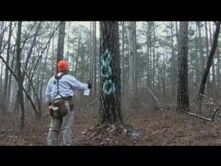 Заготовка и обработка деревянных столбов