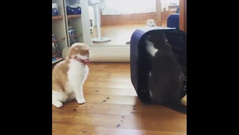 Cate training
