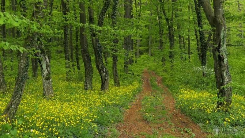 Расслабляющие звуки весеннего леса, пение птиц, звуки природы
