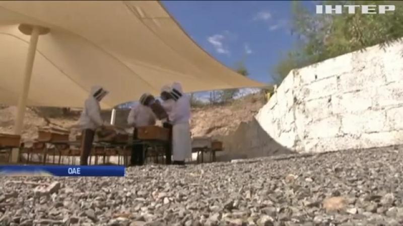 Науковці ОАЕ вивели новий вид медоносних бджіл saskatraz(Lion Arsen)